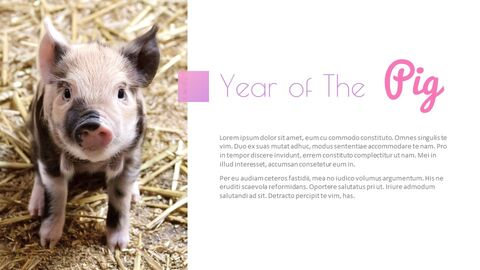 Year of The Pig Google Slides Themes_05