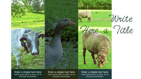 Farm and Livestock Keynote mac_09