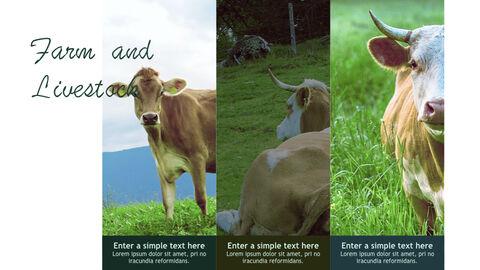 Farm and Livestock Keynote mac_35