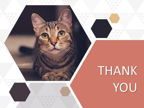 Free Google Slides themes - Pet Cat_03