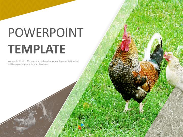 들판에 닭 - 무료 Google 슬라이드_01