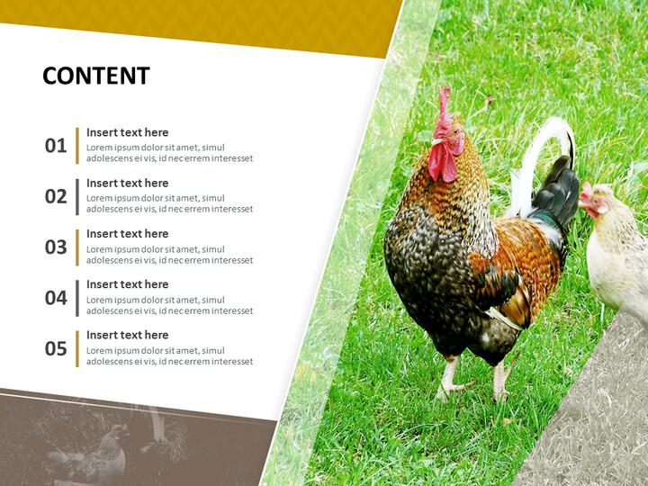 들판에 닭 - 무료 Google 슬라이드_02