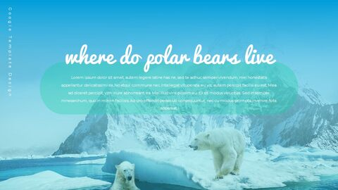 Where do polarbears live Google Presentation Templates_02