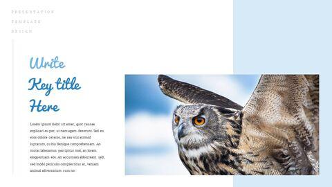 조류 (새) 심플한 Google 슬라이드 템플릿_04