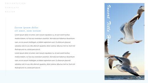 조류 (새) PPTX 키노트_03
