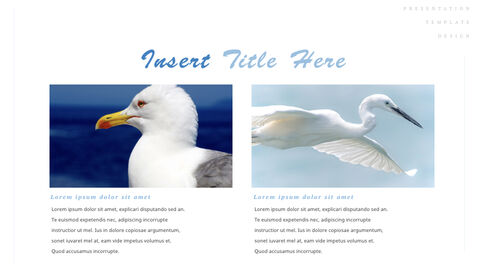 조류 (새) PPTX 키노트_10