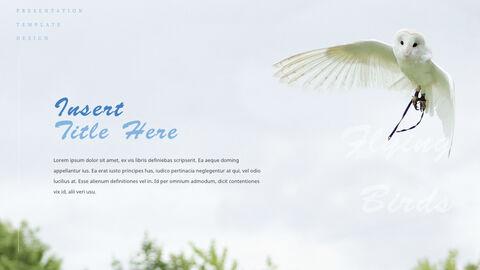 조류 (새) PPTX 키노트_15