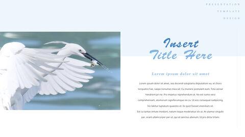 조류 (새) PPTX 키노트_24
