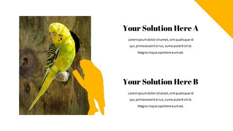 Parrot Best Google Slides_02