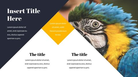 Parrot Best Google Slides_04