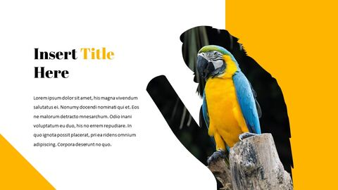 Parrot Best Google Slides_05