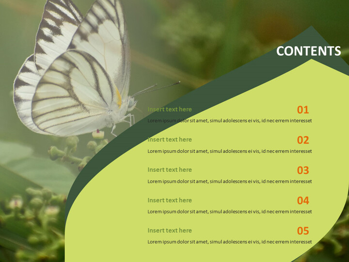 Butterfly Theme - PowerPoint Template Free Download_02