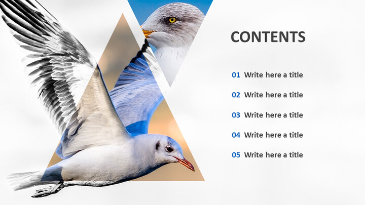 Free PPT Presentations - Seagull_02