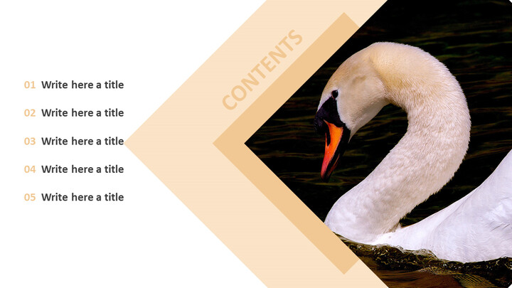Swan Lake - Best PPT Template Free Download_02