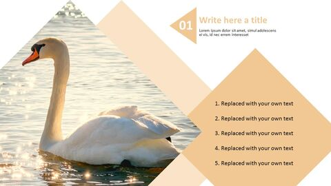 Swan Lake - Best PPT Template Free Download_03