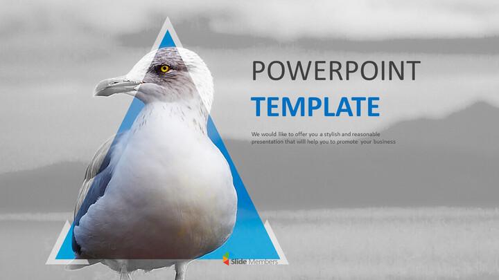Seagull - Google Slides Images Free Download_01