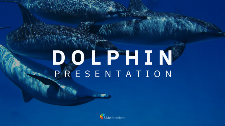 Dolphin Google Slides Templates for Your Next Presentation_01