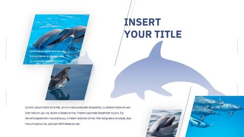 Dolphin Google Slides Templates for Your Next Presentation_05