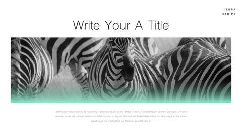 Zebra Stripe PowerPoint to Keynote_03