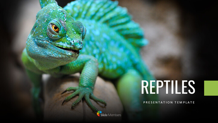 Reptiles Google Slides Templates for Your Next Presentation_01