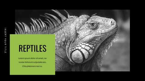 Reptiles Google Slides Templates for Your Next Presentation_02