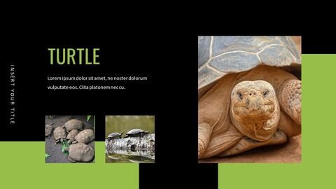 Reptiles Google Slides Templates for Your Next Presentation_03