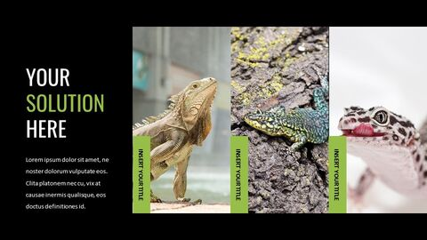 Reptiles Google Slides Templates for Your Next Presentation_04