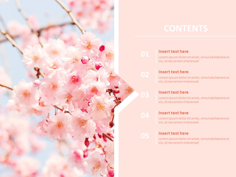 Cherry Blossom Powerpoint Template from imgscf.slidemembers.com
