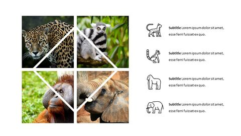 Jungle Simple Google Slides Templates_02