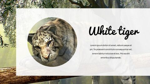 Jungle Simple Google Slides Templates_03