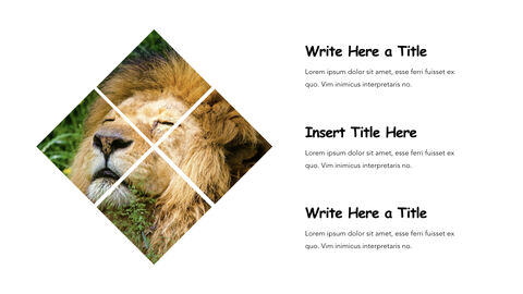 Jungle Theme Keynote Design_05