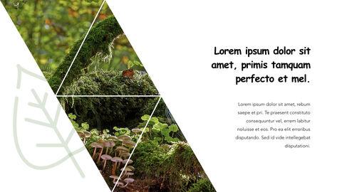 Jungle Theme Keynote Design_15