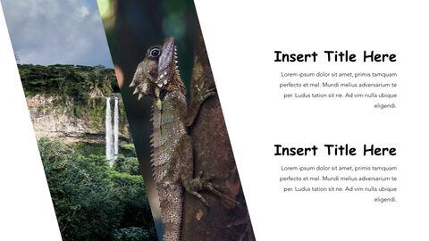 Jungle Theme Keynote Design_25