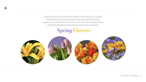 Spring Flower Keynote PowerPoint_05