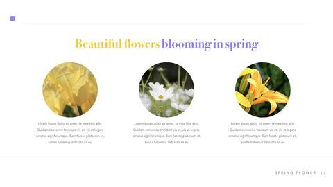 Spring Flower Keynote PowerPoint_13
