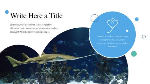 바다 생물 PPT 키노트_03