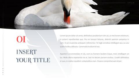 Swan Powerpoint Presentation_02
