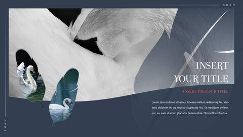 Swan Powerpoint Presentation_04