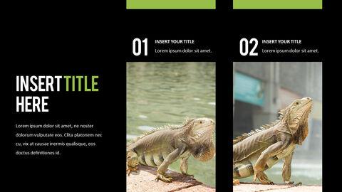 Reptiles Best PPT_05