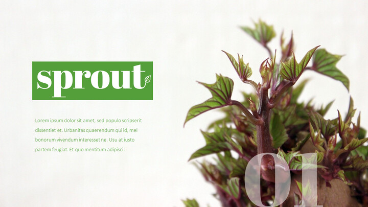 Organic Sprout PowerPoint Presentation Templates_02