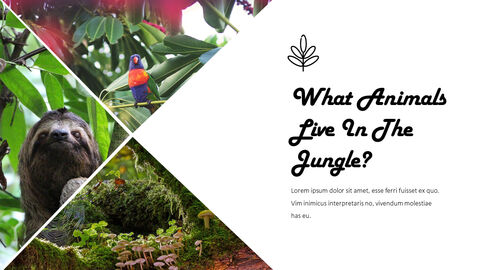 Jungle Action plan PPT_02