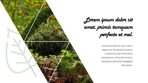 Jungle Action plan PPT_15