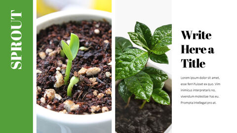 Organic Sprout PowerPoint Presentation Templates_04