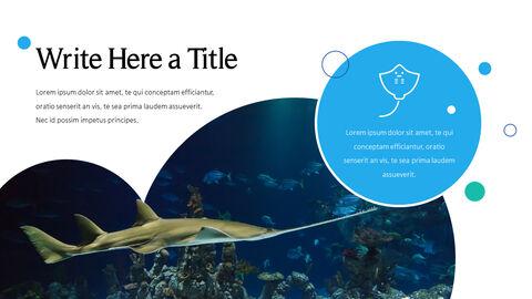 바다 생물 파워포인트용 템플릿_05