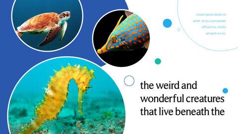 바다 생물 파워포인트용 템플릿_11