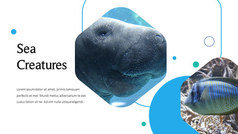 바다 생물 파워포인트용 템플릿_25