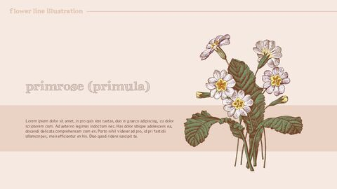 Flower Illustration premium PowerPoint Templates_02