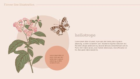 Flower Illustration premium PowerPoint Templates_03