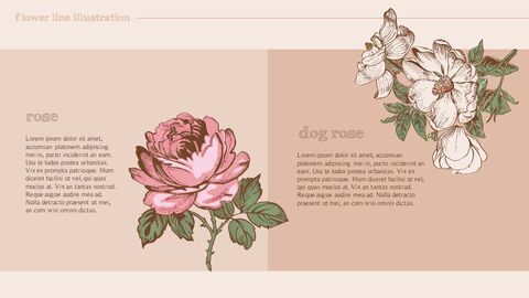 Flower Illustration premium PowerPoint Templates_05