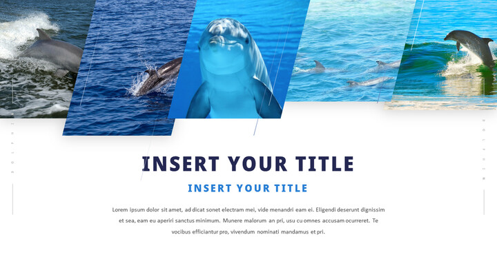 Dolphin PowerPoint Templates Multipurpose Design_02